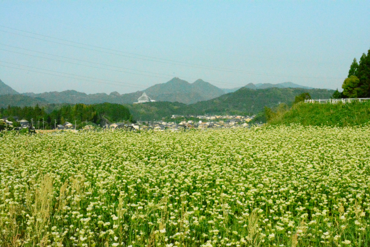 蕎麦は地元有田で契約栽培をお願いしています。そのこしと風味を是非‼